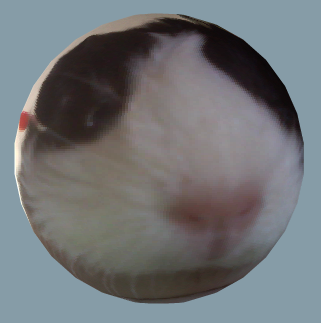 Pig on a WebCam